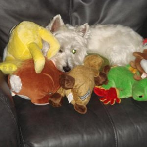 Zelly and his toy collection.