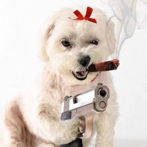 dog cigar gun